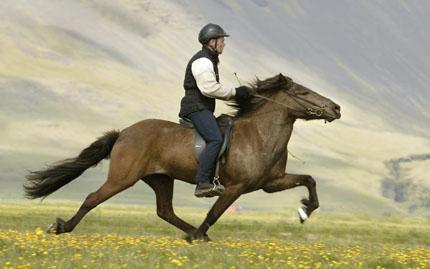 Horseback Riding and Wine Tasting - Union Square