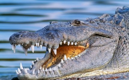 Miami Everglades Airboat Adventure with Transportation