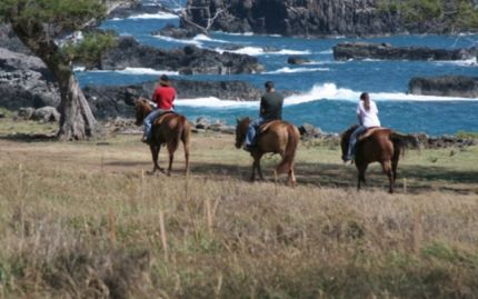 Afternoon Horseback-Riding Tour (Optional BBQ Lunch)