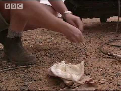 First Aid Kit Rescue - Ray Mears Extreme Survival - BBC