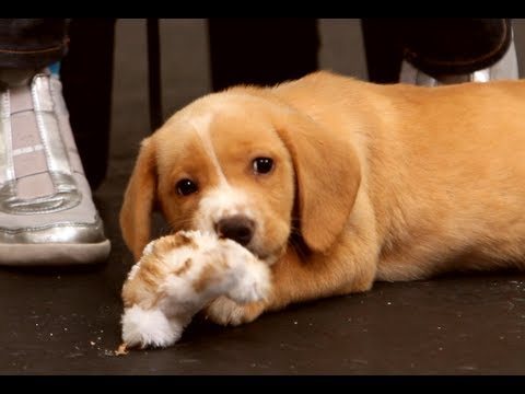 Dog Training: How to Deal with a Biting Puppy