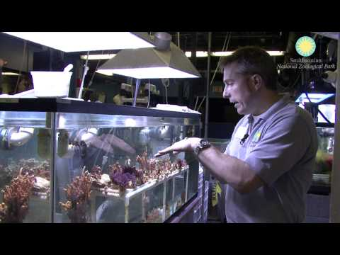 Giant Clams Debut at the Invertebrate Exhibit