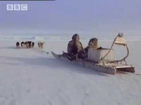 Following his father's footsteps - A Boy Among Polar Bears - BBC