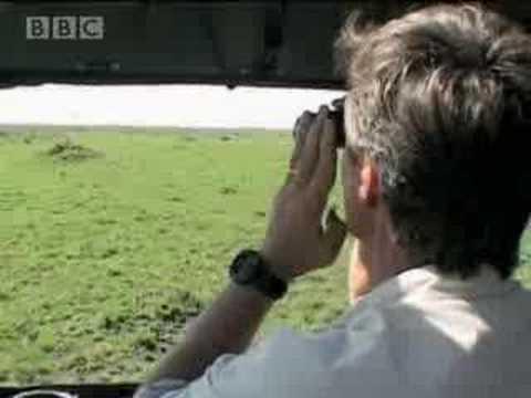Cheetahs vs birds - BBC wildlife