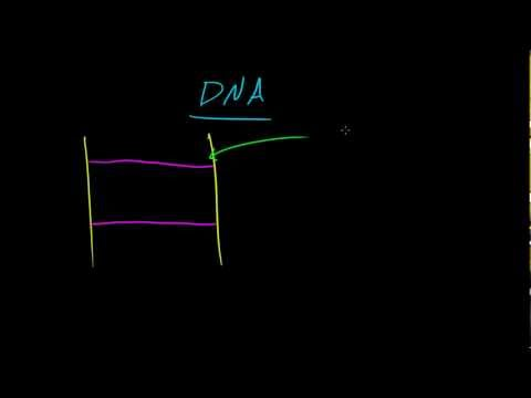 Biology Lecture - 12 - Nucleic Acids