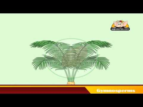 Learn About Plants - Gymnosperms