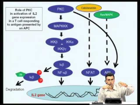 Mod-05 Lec-18 Regulation of gene expression by Protein Kinase C
