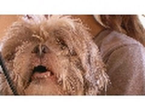 Mill Puppy Makeover