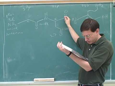 Organic chemistry: Amino acids and peptides (11)