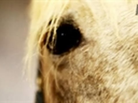 Kareem and His Horses | Saved