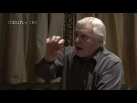 PART 3: David Attenborough: Scientist or Broadcaster? - by Nature Video