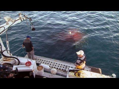 HydroTech - To Catch a Shark