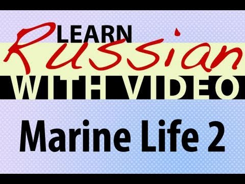 Learn Russian with Video - Marine Life 2