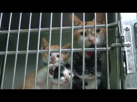 ACCT: Pet Rescue
