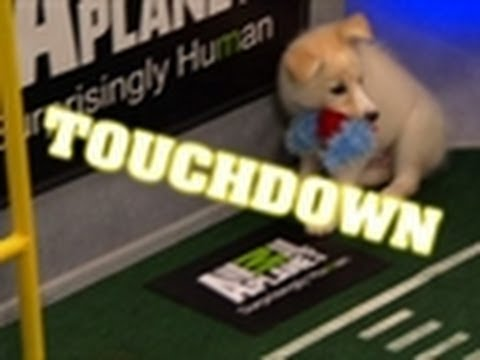 Aberdeen's Epic Scramble for TD | Puppy Bowl VIII