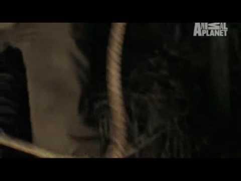 Caught! Viper Snake