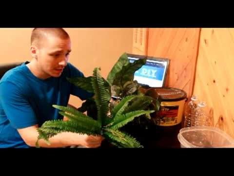 HOW TO: DIY Aquarium Plants