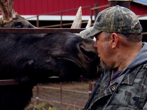 Only In America with Larry the Cable Guy - Larry Kisses a Moose