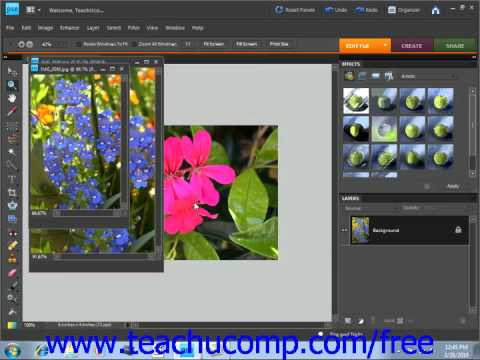 Photoshop Elements 9.0 Tutorial The Projec/tPhoto Bin Adobe Training Lesson 3.4