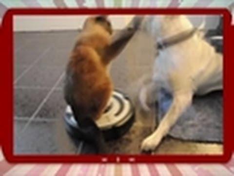 Cat Rides Vacuum | Puppies vs. Babies