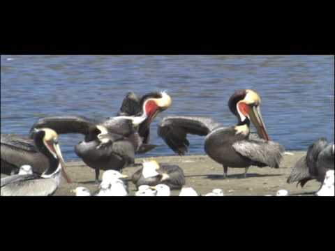 Birds Vertebrates | Biology | Nature