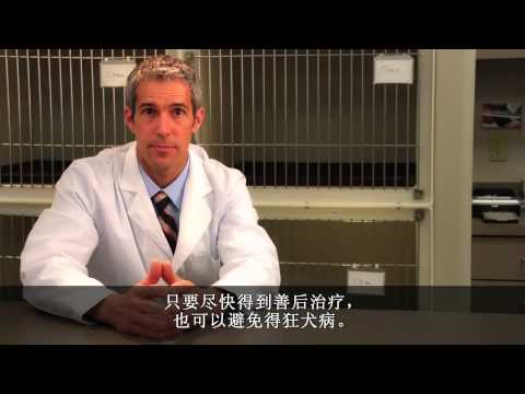 Rabies: Simple Steps Save Lives (English, with Mainland Chinese captions)