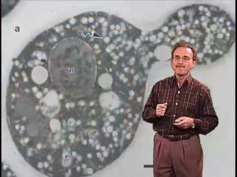 Randy Schekman (Berkeley) Part 1: Studying Protein Secretion in Yeast