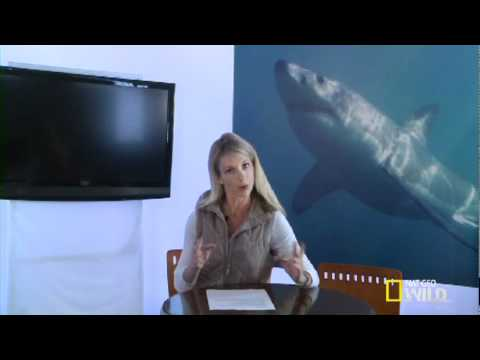 'Shark Attack Experiment LIVE' - Q&A: Putting Sharks in a Trance