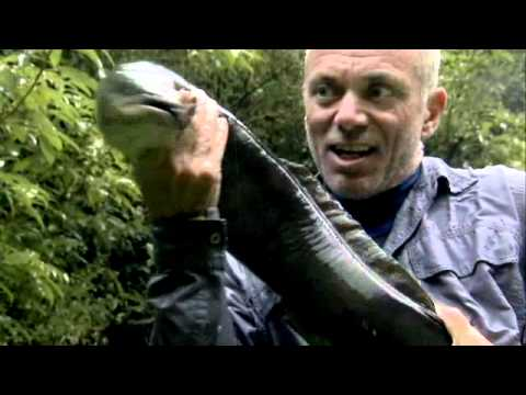 River Monsters: Season 3 Trailer*
