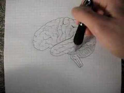 Neuroanatomy Tutorial 9 (Brain)