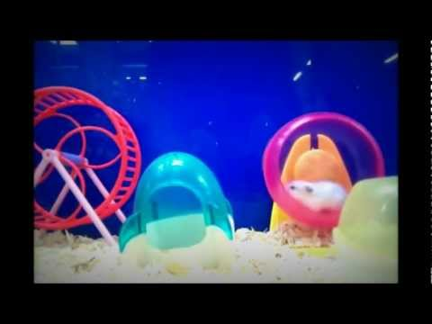 Come and Play with Me - Hamsters Play