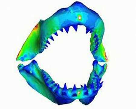 'Crash-tested' skulls throw light on extinctions
