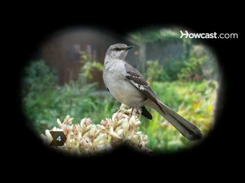 How To Identify Birds: the Mockingbird