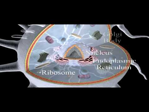 Cell Structure Overview | Cell Biology