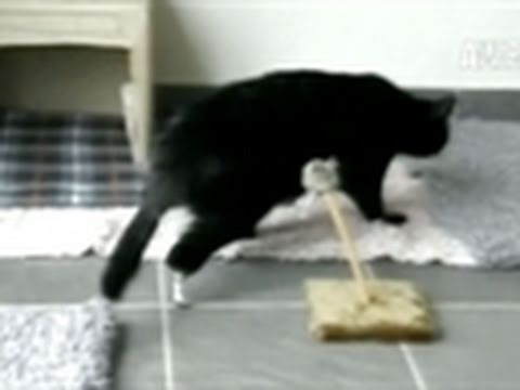 WTF: World's First Bionic Cat