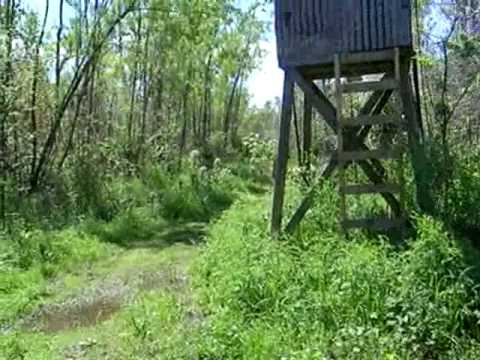 Walking Through Louisiana Swampland