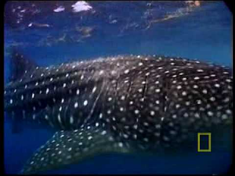 Whaleshark: Just One Frame