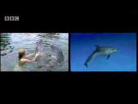 Swimming with dolphins - Things to do before you die  - BBC