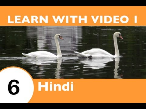 Learn Hindi with Video - This Hindi Lesson Is NOT Just for the Birds!!