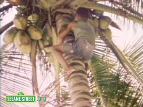 Sesame Street: Coconuts