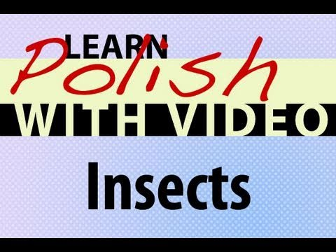 Learn Polish with Video - Insects