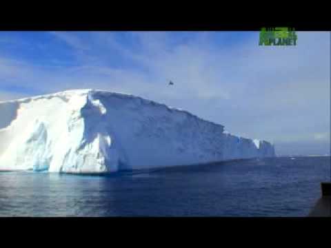 Whale Wars - Whale Wars Crew Profiles