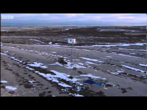 Churchill Viewing Tower - Vets in the Wild Special: Polar Bears - BBC