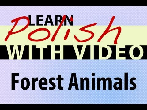 Learn Polish with Video - Forest Animals