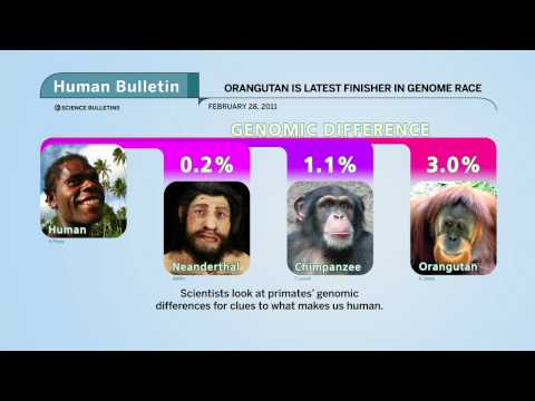 Science Bulletins: Orangutan Genome Finished