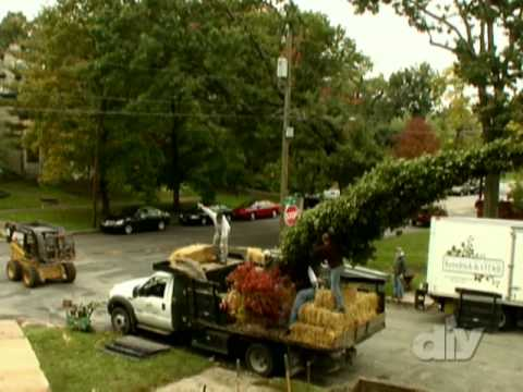 Moving a Large Pear Tree-DIY