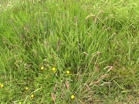 Gardening for us, Video 2, A look at Grass in the garden.