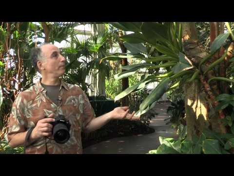 Garden Photo Tips With Rich Pomerantz — Thinking About Light