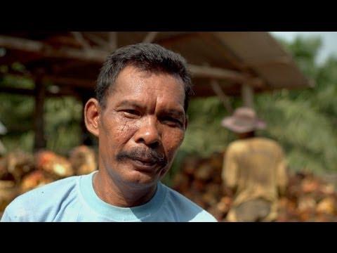 Good Oil - Sumatra's Sustainable Palm Oil