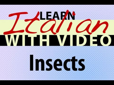 Learn Italian with Video - Insects